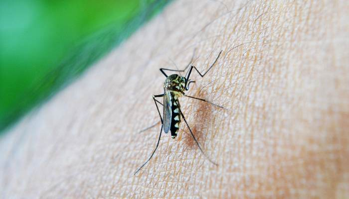 Things That Attract Mosquitoes